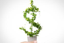 money-plant-intro-FB.jpg